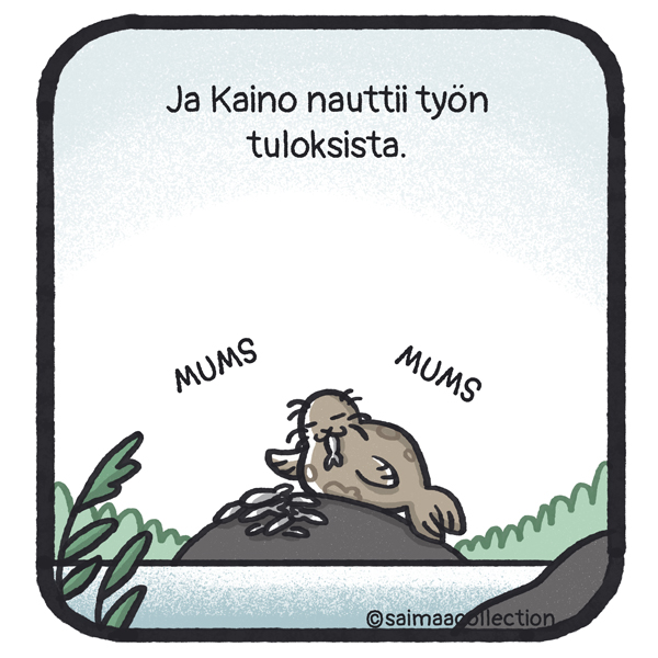 Ja Kaino nauttii työn tuloksista. Kaino-norppa istuu kivellä syömässä muikkuja.